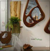 Australian Camphor Laurel wall natural edge slab wall hanger and plant display